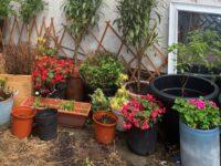 Judith's garden