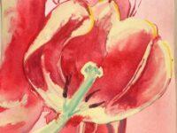 Diana's tulips