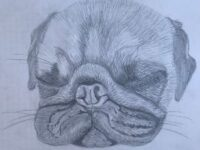 Paula's pug