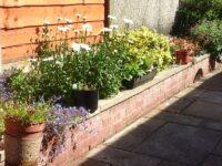 Louise's back garden