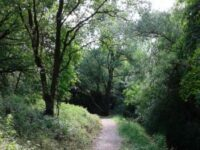Zoe's path