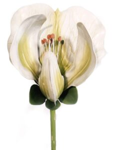 Picture of White Sweet pea plant model.