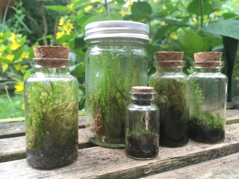 Bottle terrarium experiments with moss pictured in a group.