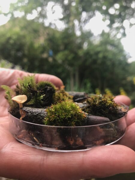 Moss from a tree in a petri dish.
